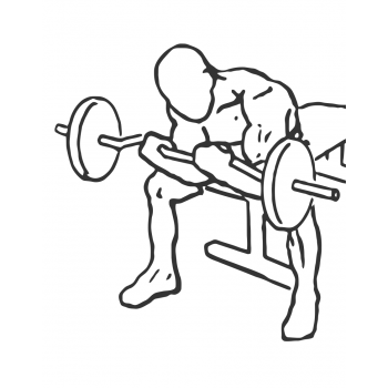 Seated Close-Grip Concentration Barbell Curl - Step 2