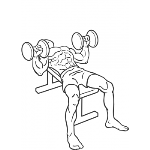 Dumbbell Bench Press - Step 2