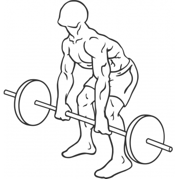Barbell Rear Delt Row - Step 1