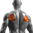 Middle Back Exercises